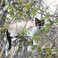 2009 05 11 Blanco au milieu des branches