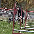 Le Club Canin de Miniac-sous-Bécherel