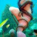 composition sous marine