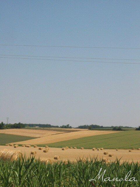 coulur des blés