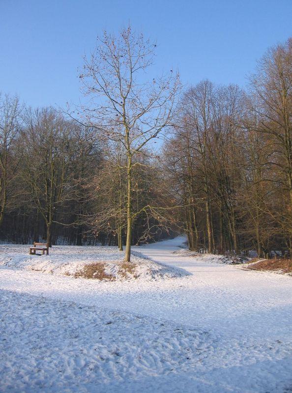 Neige dans la forêt de Meudon
