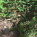 Magnifique cèpe d'été écrasé de soleil sur un sentier...