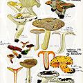 Noms japonais de champignons (2) par rokuya imazeki