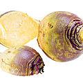 AMAP de Treillières : les recettes de légumes de la ferme de la Tindière