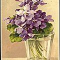 Les violet