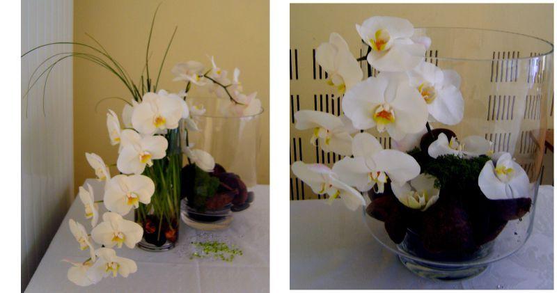orchidee decoration