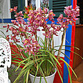Bouquet du week end # 309 - sem 30
