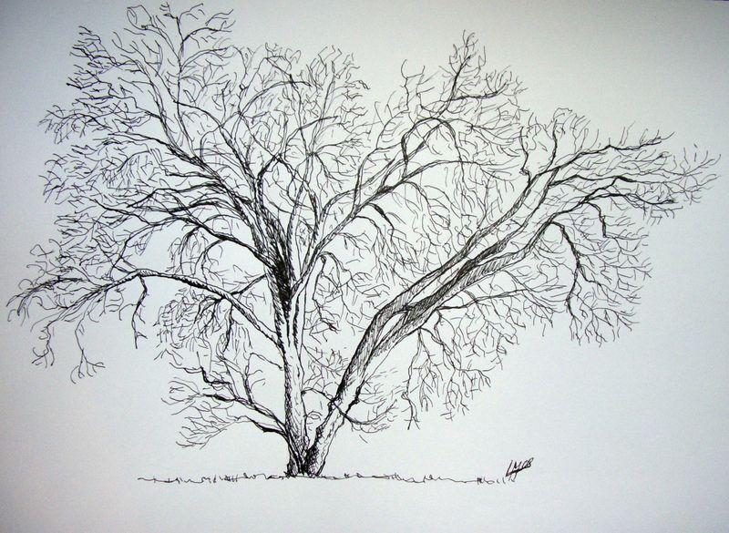 Arbre en hiver les pinceaux de malela - Arbre dessiner ...