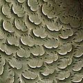 Détail. Coupe, 12e siècle, Dynastie Song du Nord (960-1127), grès à couverte céladon. Hauteur : 0.09 m. Diamètre : 0.207 m. MA4190. Paris, musée Guimet - musée national des Arts asiatiques. Photo (C) RMN-Grand Palais (musée Guimet, Paris) / Richard Lambert