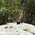 rose-des-sables-15-avril-2014