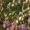 Bonne année a toutes et a tous !!!