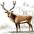 Cerf animal prehistoire