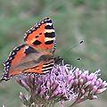 Papillons, Araignés, Mouches,...