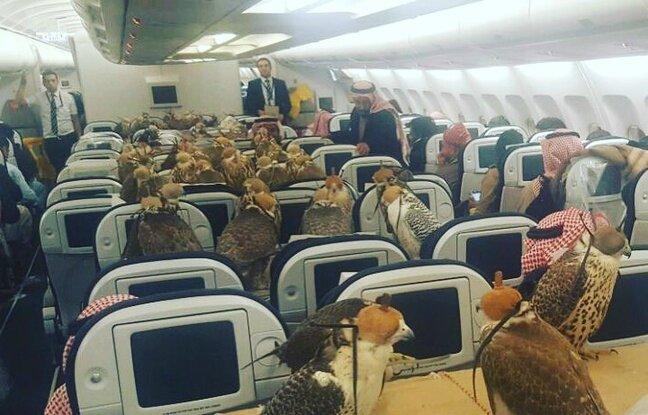 Un prince saoudien paie des billets d'avion à ses 80 faucons