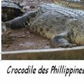Crocodile des Philippines = Crocodylus mindorensis