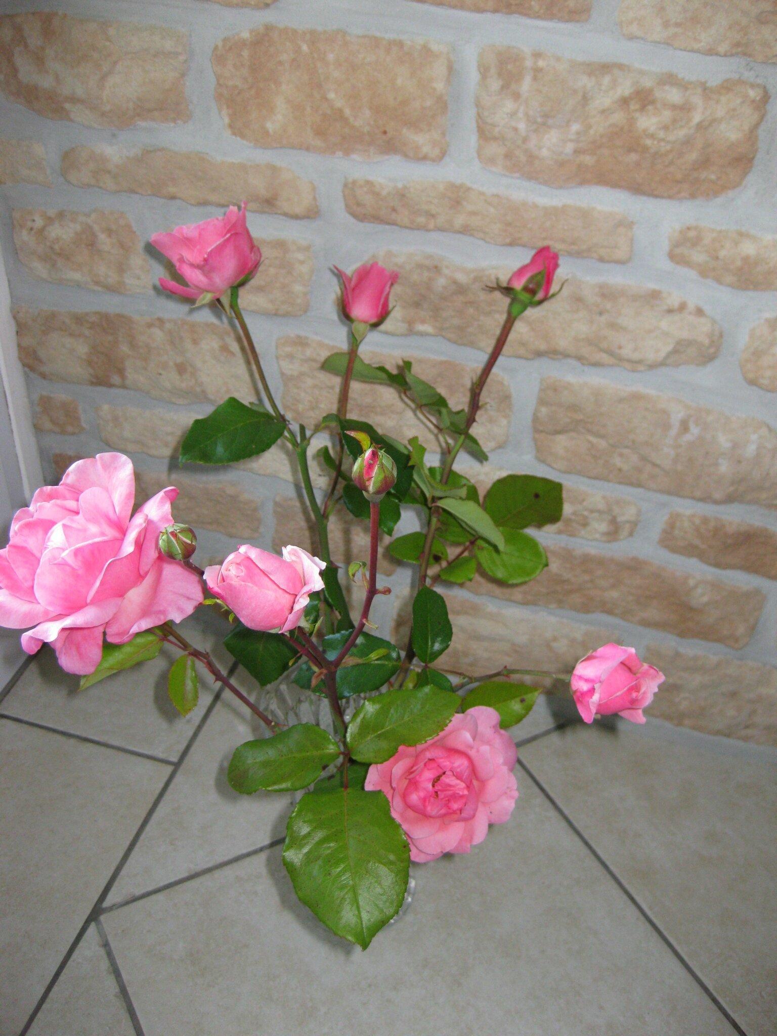 ROSES DU JARDIN 2