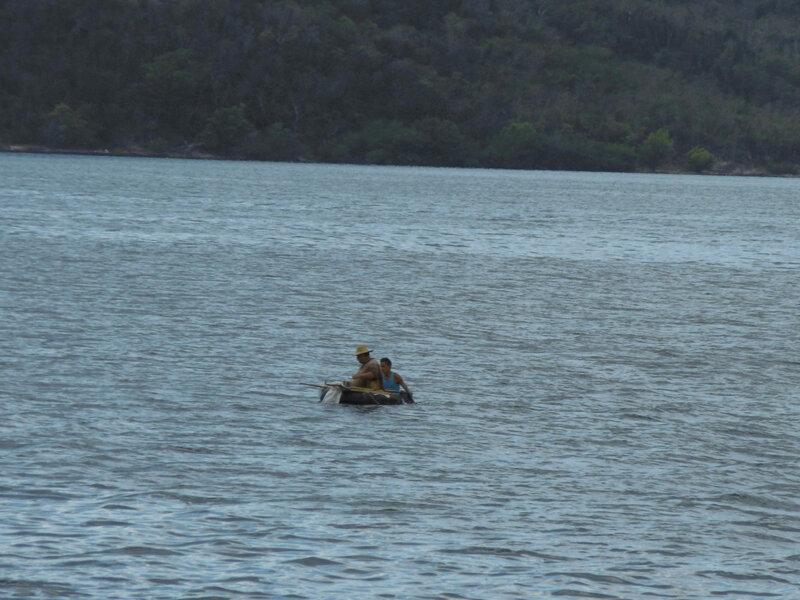 pêcherus sur tron arbre Haiti
