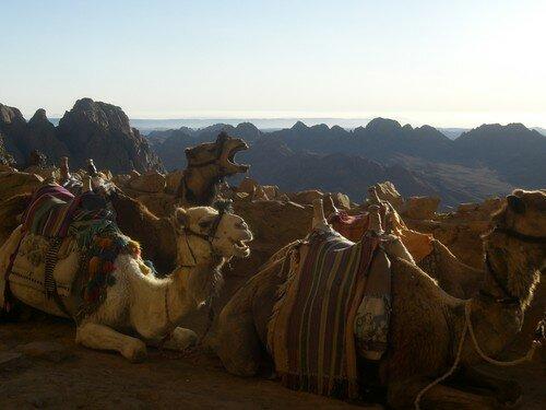Montagnes autour du Mont Sinai
