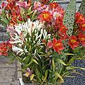 les jolies fleurs de Madere