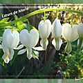 2017 les tulipes de balanicole