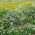 Fleurs de Leon 24061619