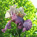 Jardin en fleur, juste pour le plaisir des yeux!