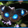 Butterfly (166)