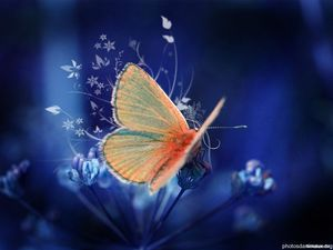 wallpapers-papillons-hd-13