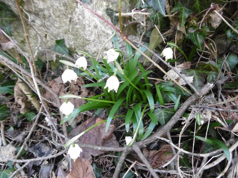 L le printemps des poètes