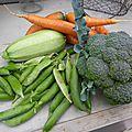 16 juin - panier de la journée et brocolis ...les premiers de l'année