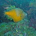 poisson bourse 239