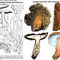Gyroporus castaneus 2000_1006_19_mont typus