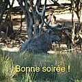 Le <b>brame</b> du <b>cerf</b> au Parc de Sainte-Croix en Moselle