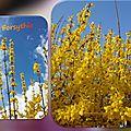 2016.05.01 le printemps des arbustes...