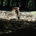 Un dimanche matin à la forêt de chailluz (besançon)