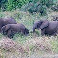 Elephants_07