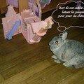 Histoire de lapin