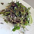 Salade de mauvaises herbes