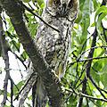 Groupe Ornithologique du Jura