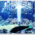 Aquarium de <b>St</b>-<b>Gilles</b> les <b>Bains</b> (4/11) - Pavé de Légine poêlé