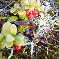 17-10-08 Sortie Montagne et rennes (052)