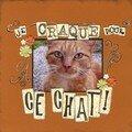 Je craque pour ce chat !