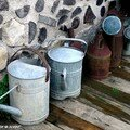 Chambrez l'eau d'arrosage des plantes d'intérieur