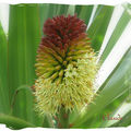 Flore de mon île