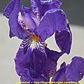 10/05/15 : je vous ai rapporté des fleurs du lot et garonne