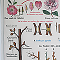 Collection ... <b>Affiche</b> LA FLEUR Fécondation / Multiplication végétative