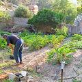 Montecristo, le jardin de Giorgio
