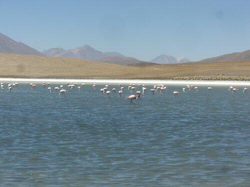 Sud de la Bolivie, laguna avec flamands rose