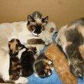 2008 03 31 Les 9 chatons avec leurs mère Papillon et Blanco