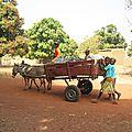 Yélékéla, la vie d'un village au Mali